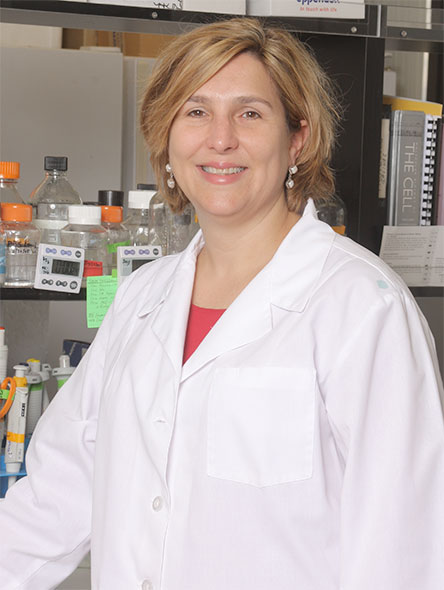 Sarah F. Hamm-Alvarez